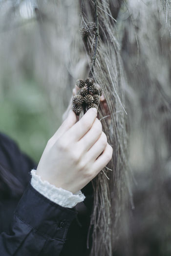 Close-up of woman holding small pine cones