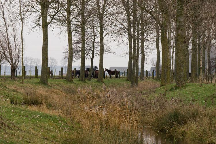 Herds of horses on both side of the Oude Biezenkreek, Aardenburg EyeEm Market © Landscape Herd Of Horses Creek Field Sony A77ii Grass Zeeuws Vlaanderen Zeeland  The Netherlands