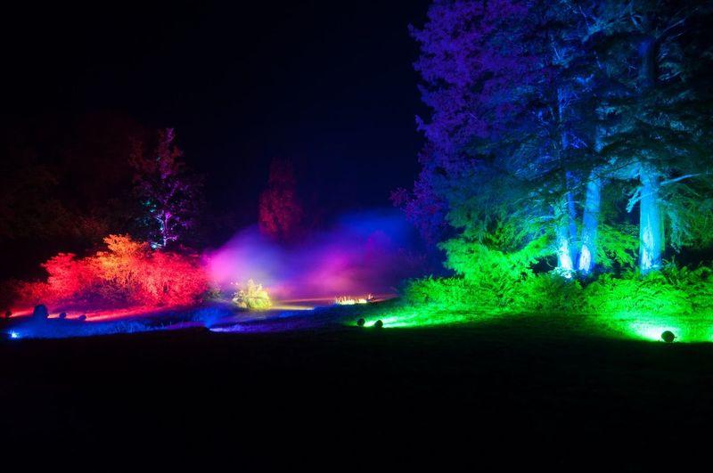 Schlosspark Lütetsburg Illiumination Night Mystical Trees