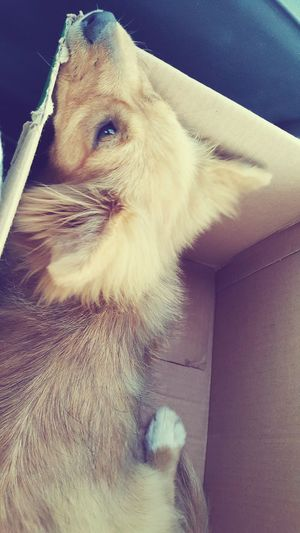 Pets No People Domestic Animals Animal Themes Close-up Furry Dog Dog Lying Down Back View Of Dog Furry Friend Box - Container High Angle View Furry And Fluffy Animal Hair Car Interior Brown Colour Dog Snout Dog Ear Cute Puppy One Animal White Paw