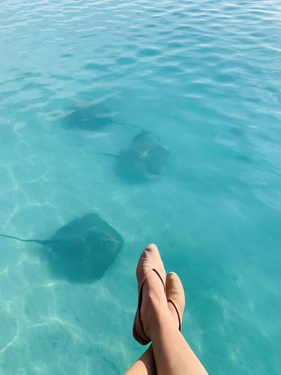 Watching the sting rays