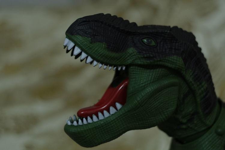 Close-up of an animal representation