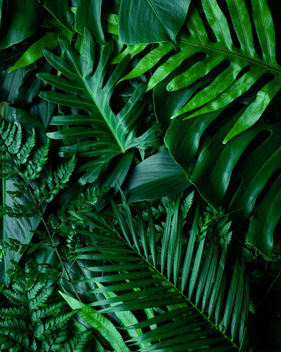 Full frame of green leaves pattern background, nature lush foliage leaf texture , tropical leaf