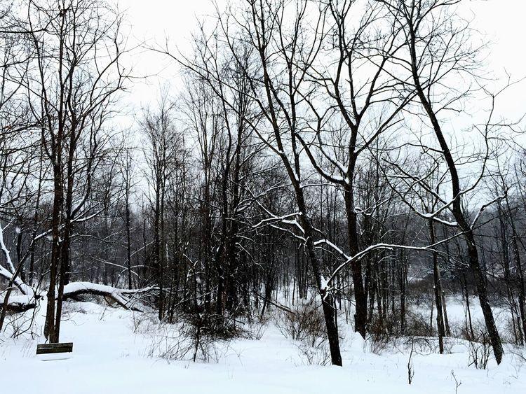 Taking Photos Monochrome IPhone IPhoneography Snow ❄ My Back Yard Blackandwhite Photography Black&white Hello World