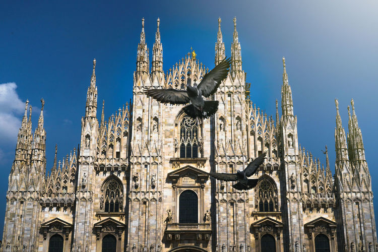 Low angle view of birds flying against cathedral