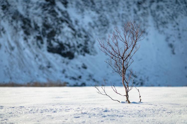 Loneliness Lonely Northern Norway Norway Bare Tree Beauty In Nature Branch Close Up Close-up Cold Temperature Day Deep Snow Landscape Lofoten Mountain Mountain Range Nature No People Open Aperture Outdoors Snow Tree Winter Winter Wonderland Shades Of Winter