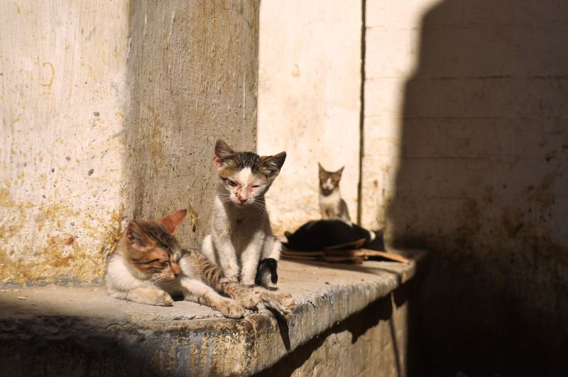 Cats sitting against wall
