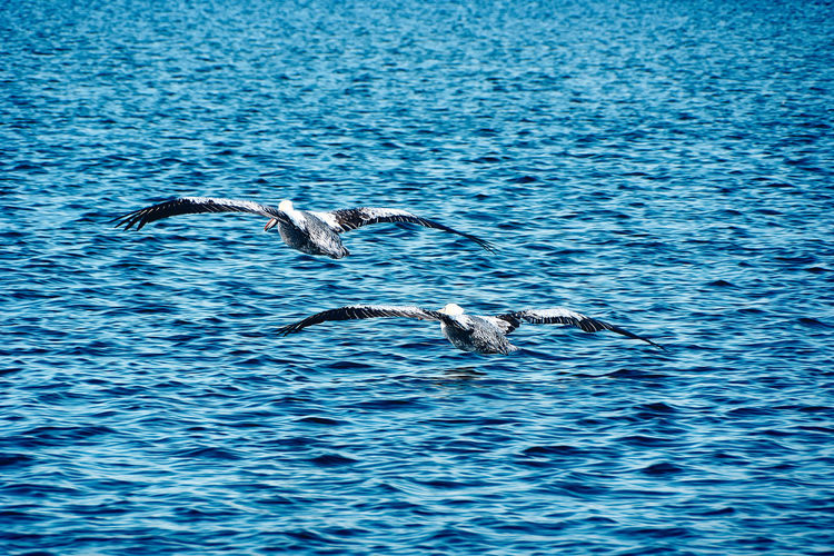 Wildlife... Animal Animal Themes Animal Wildlife Animals In The Wild Beauty In Nature Bird Blue Day Flying Group Of Animals Landscape Marine Motion Nature No People Outdoors Rippled Scenics Sea Seascape Spread Wings Tourism Vertebrate Water Waterfront