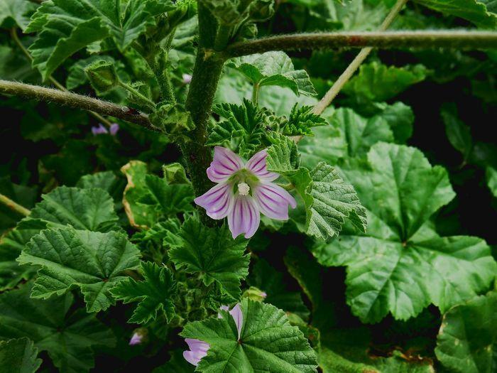 https://youtu.be/jV8ODnMaJx4 Leaf Flower Summer Botany Plant Green Color Living Organism Plant Part Nature Beauty In Nature Botanical Garden Flower Head