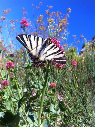 Flower Growth Nature Plant Fragility Beauty In Nature Freshness Day Animal Themes One Animal Close-up No People Outdoors Blooming Insect Flower Head Butterfly Insects