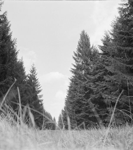 Analog Analogue Photography Beauty In Nature Blackandwhite Clear Sky Close-up Day Field Film Photography Grass Growth Landscape Monochrome Nature No People Outdoors Scenics Sky Tranquility Tree