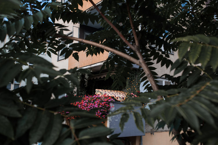 Apartment Buildings Trees Apartment Beauty In Nature Day Flower Growth Leaf Low Angle View No People Outdoors Plant Residential Building Residential District Selective Focus Tree
