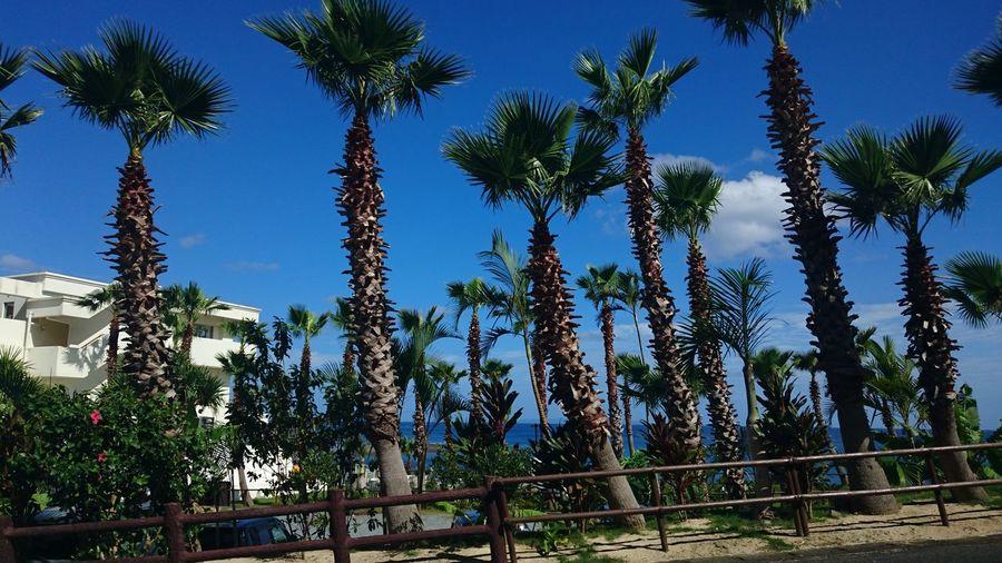 Blue Clear Sky No People Palm Tree Tree
