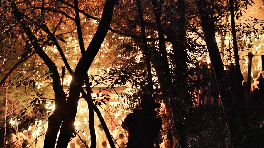 Fire Torches People Large Group Of People 祭り(festival) In Japan Japan Tradition Festival Japanese Shrine Torii Gate In The Forest Branches Silhouettes Light And Shadow Primitive Japanese Culture Hello World Amazing View Travel Photography Travel Destinations People Watching 御燈祭 神倉神社 祭り 伝統文化 Tree Branch Tree Trunk Backgrounds Silhouette