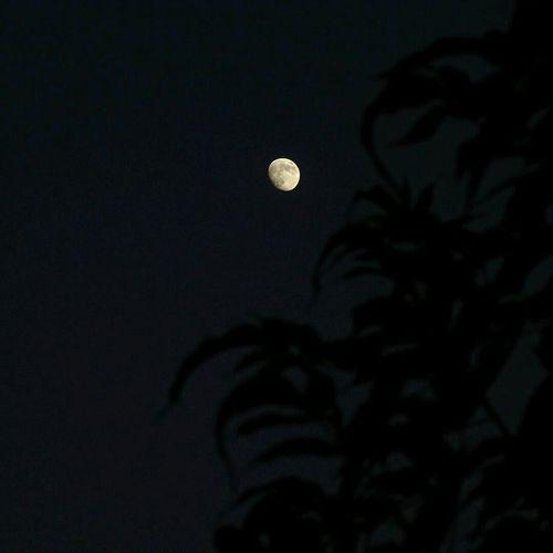 Moonlover Sky Gazing