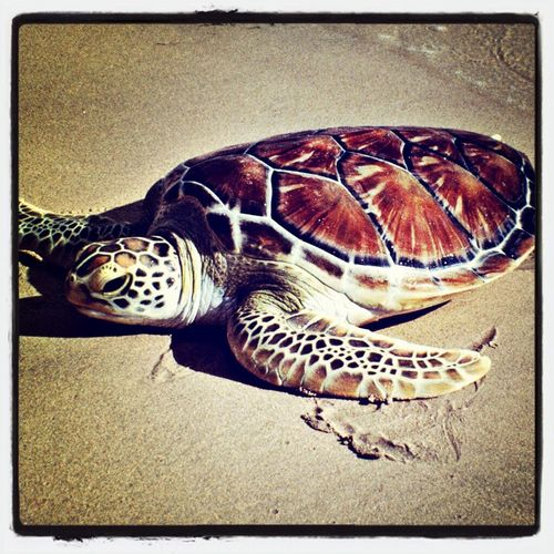 Just been back from Spain wow turtle