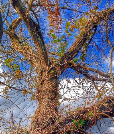 My Point Of View Power In Nature Tree Nature Low Angle View Saikai City Japan Beauty In Nature Outdoors Sky Blue Branch No People Scenics Clear Sky Day Tranquility