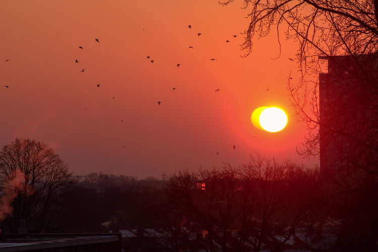 Silhouette of birds at sunset
