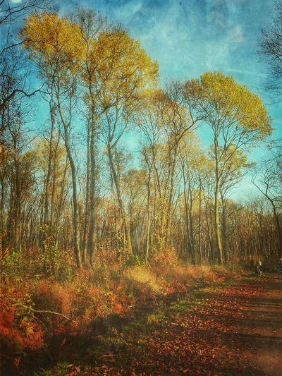 Nature Nature Photography Forest Autumn Trees EyeEm Best Shots