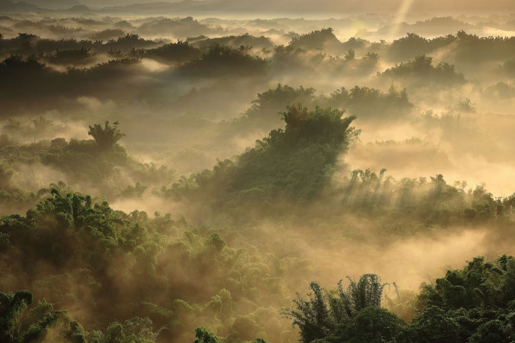 Tree Plant Fog Beauty In Nature Scenics - Nature Tranquil Scene Tranquility Growth Nature Non-urban Scene Sky Hazy  No People Forest Idyllic Cloud - Sky Day Outdoors Land