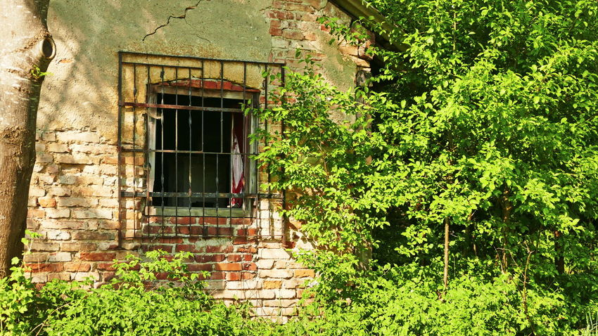 Barn Brick Wall Abandoned Architecture Building Building Exterior Built Structure Cottage Day Forest Photography House Nature No People Old House Outdoors Plant Tree Window Wood - Material