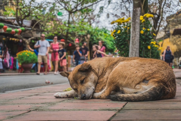 Dog relaxing on footpath