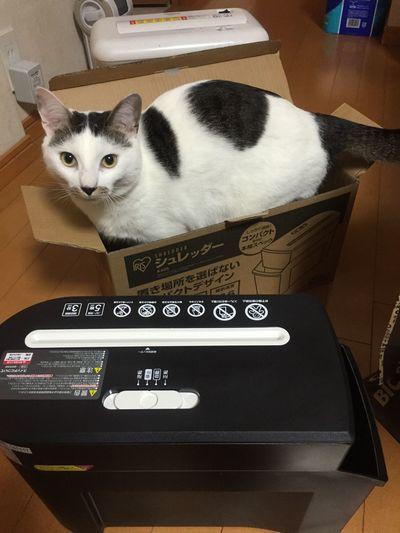 I bought new paper shredder. It isn't for the cat. Cat Shredder