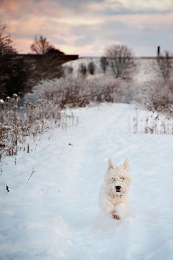 Dog on snow field against sky during winter