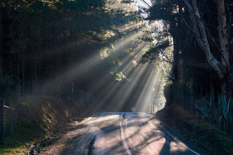 Path to light... EyeEmNewHere Beauty In Nature Day Direction Focus On Shadow Forest Growth Land Light And Shadow Nature No People Outdoors Plant Road Scenics Shadow Streaming Sunbeam Sunlight The Way Forward Tranquil Scene Tranquility Transportation Tree WoodLand