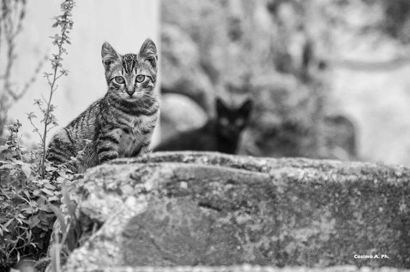 The Cat Cat Cats Love , OpenEdit , EyeEm , Friends , EyeEm Best Shots , Eyeembestpics Tipycal Openedit From My Point Of View Eye4photography Photooftheday  Free Open Edit Open Edit Open Edit For Everyone OpenEdit