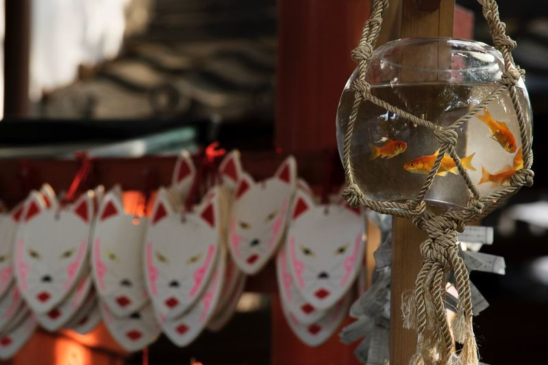 狐と金魚鉢 金魚 金魚鉢 神社 EyeEm Best Shots EyeEm Gallery EyeEm Japan Eyemphotography Japan Photography Eyeem Market EyeEmBestPics Goldfish Light To Come In EyeEm Nature Lover EyeEmBestEdits EyeEm Shrine Shrine Of Japan