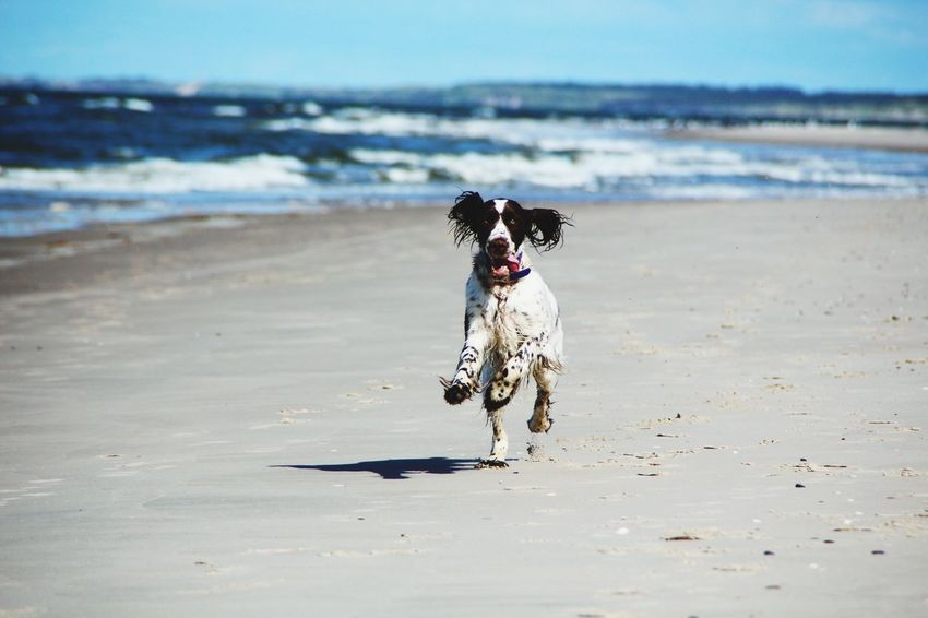 Holly Tversted EyeEm Selects Dog Beach Pets Domestic Animals Sand Mammal Nature Water Animal Themes Running Sea No People Outdoors One Animal Day Sky