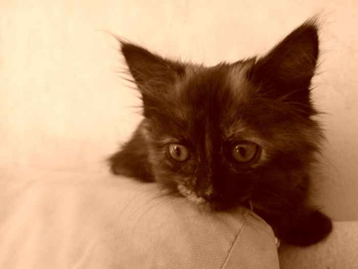 Cat Cute Pets