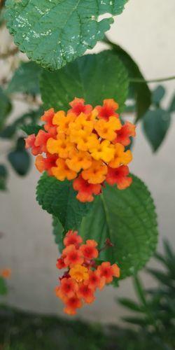 petal Flower