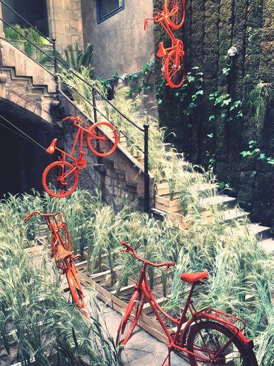 Gironatempsdeflors Flowers Exposition City Beauty Walking Around Girona Gironamenamora