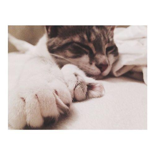 Taking Photos Cat Cat Lovers Cat Nap