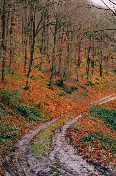 A road through the woods Canon Eos 1n Filmisalive Analogphotography Ektar100 Ektar 35mm Film Film Photography Filmisnotdead Canon Canonphotography Autumn Nature Scenics Beauty In Nature Forest Road Outdoors No People Leaf Landscape Nature Reserve Tree