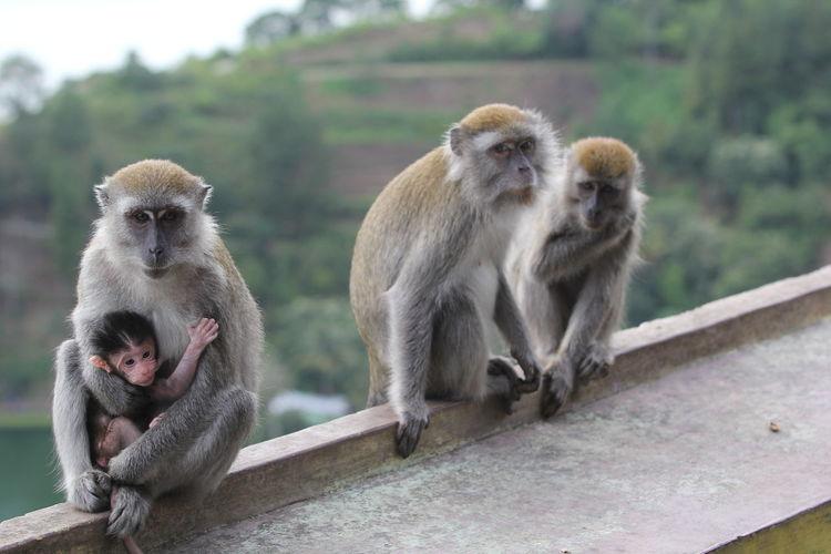 Monkeys On Railing