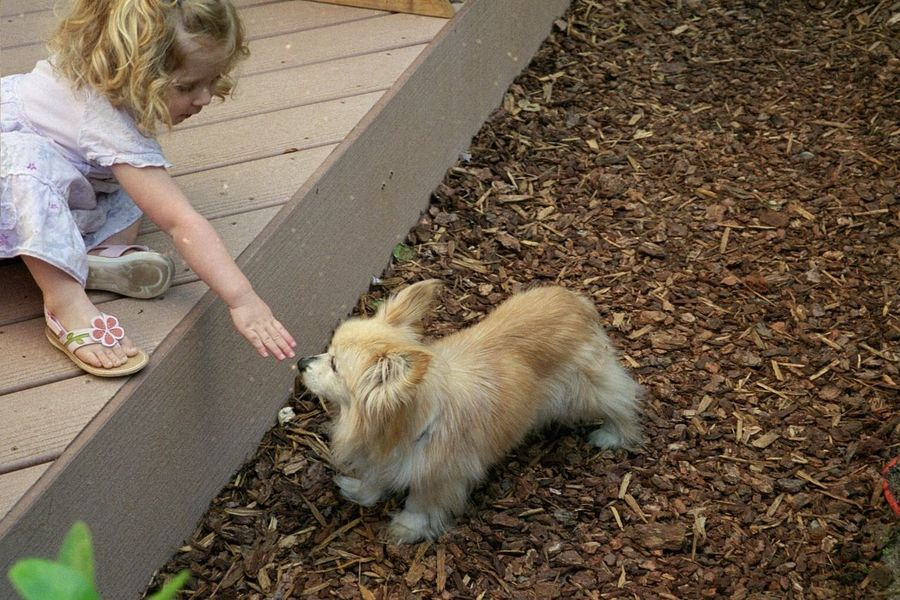 This is a papillion dog with a girl seen fron side Adult Animal Themes California Curly Hair Day Dog Domestic Animals Domestic Cat Feline Fox-like Foxylady Longhair Mammal One Animal One Person Outdoors Papillion Papillion, Dog, Cute, Precious, Furry People Pets Purebred Toy Breeds