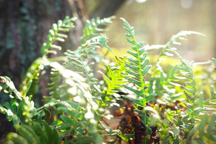 Close-up of fern growing on tree in forest