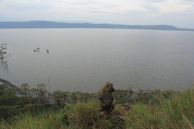 What's On The Roll Tranquil Scene Water Sky Nature Beauty In Nature Tranquility Rickeherbertphotography Travel Photography Lake Nakuru Kenya Monkey Monkey King