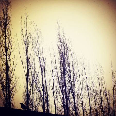 Tweeting Bird Trees Window View Diveeverydaylife