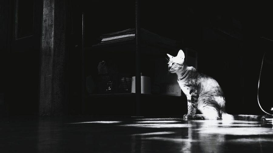 Cat sitting in room