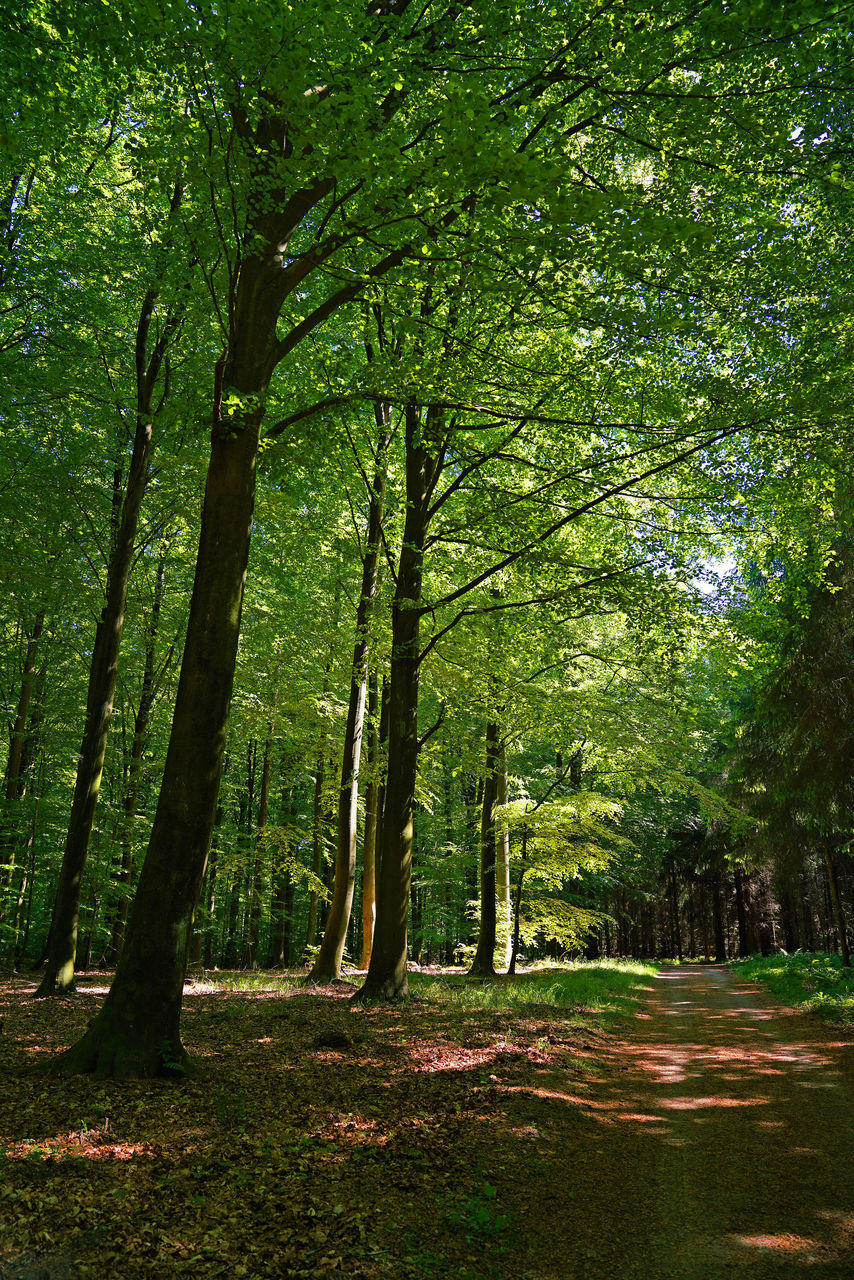 forest, nature, tranquility, tree, no people, beauty in nature, outdoors, day