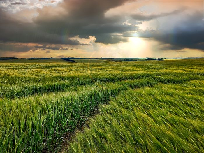 Hampshire landscape at Hannington Atmosphere Atmospheric Mood Beauty In Nature Cloud Cloud - Sky Cloudscape Cloudy Day Dramatic Sky Field Grass Grassy Green Color Growth Horizon Over Land Landscape Majestic Nature Outdoors Rural Scene Scenics Sky Storm Cloud Tranquil Scene Tranquility