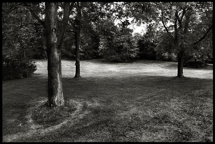 Topham Pond, Mount Dennis, Toronto, June 2018. Blackandwhite Landscape Park Toronto Film Photography Tree Tree Trunk Sky Woods Tree Area Glade