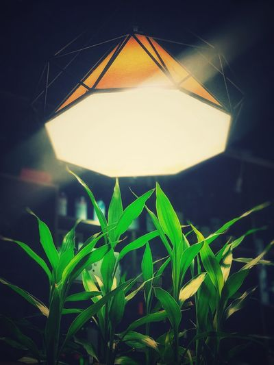Growing night Growing Night Leaf Plant Part Plant Green Color Nature No People Close-up