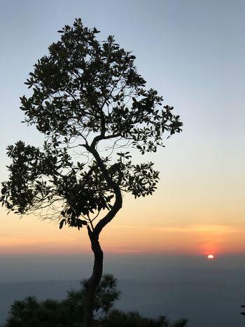 Tree Silhouette Sun Sunset Thailand