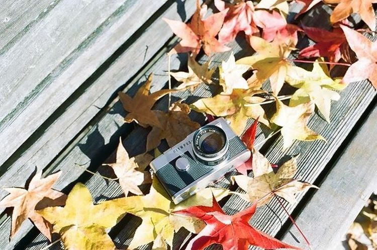 Leaf Autumn Day Nature Film Beauty In Nature Film Photography Film Filmcamera Film Camera