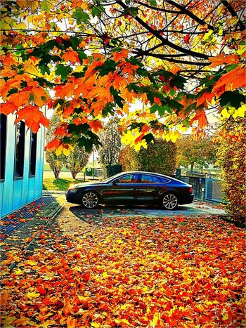 ENERGYKA Audi A7 Autumn Beauty In Nature Parking First Eyeem Photo